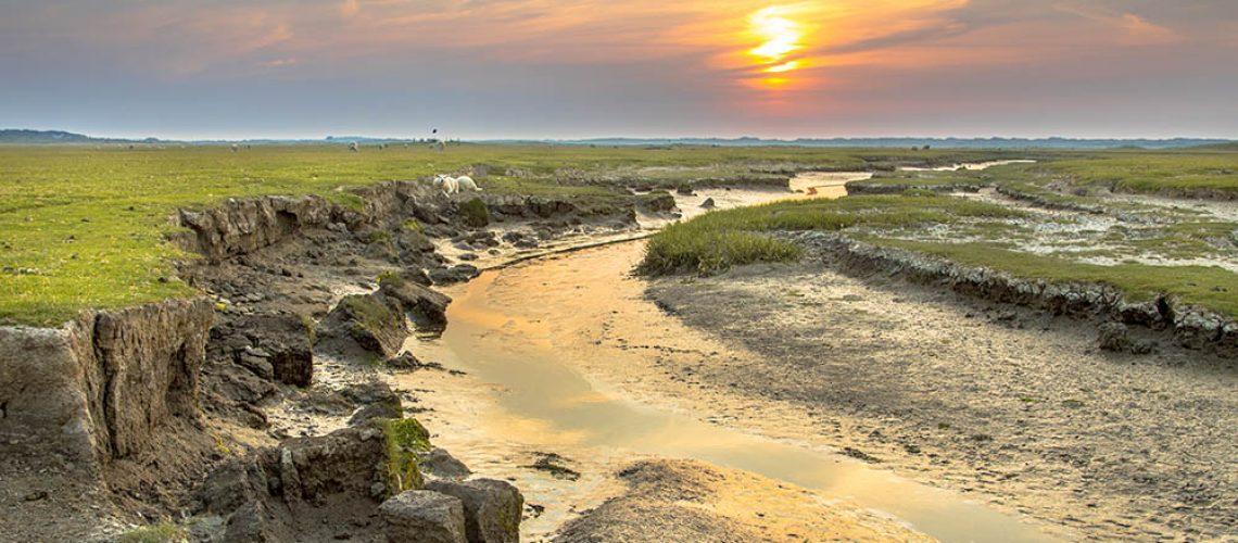Tidal channel in salt marshland with natural meandering drainage system on wadden island of Ameland in Friesland, Netherlands